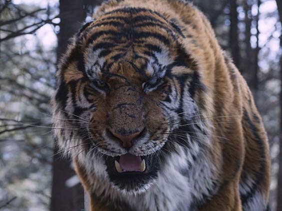 the tiger film review 3